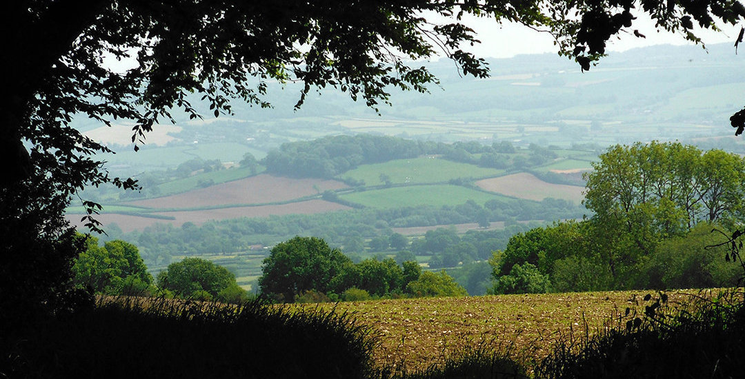 Blackdown Hills Somerset DevonClinic Homeopathy acorn homeopathy index _op