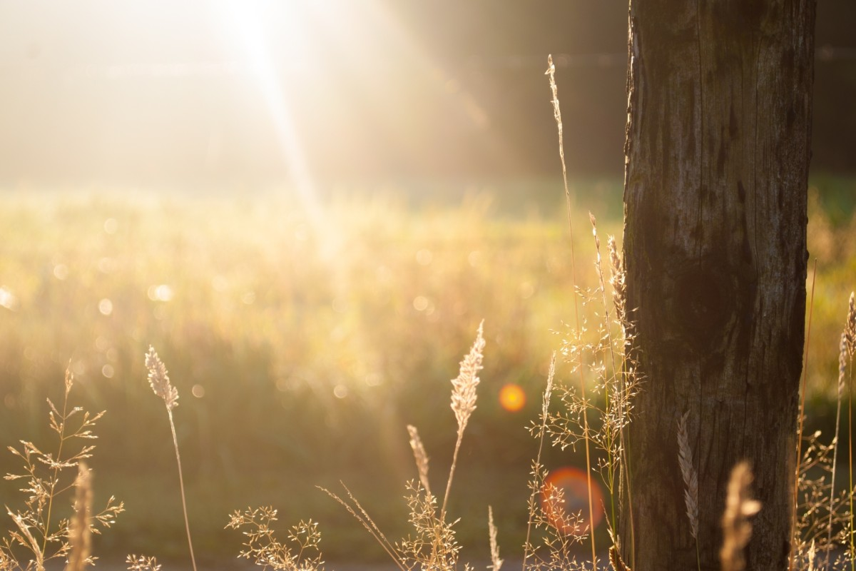 Acorn Homeopathy Nature Rays of light